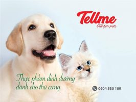 Tellme All for Pets – Thương hiệu Việt chất lượng cho thú cưng